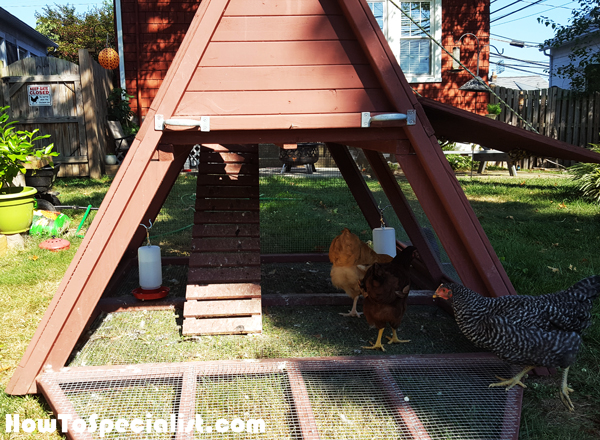 Building-a-simple-chicken-coop